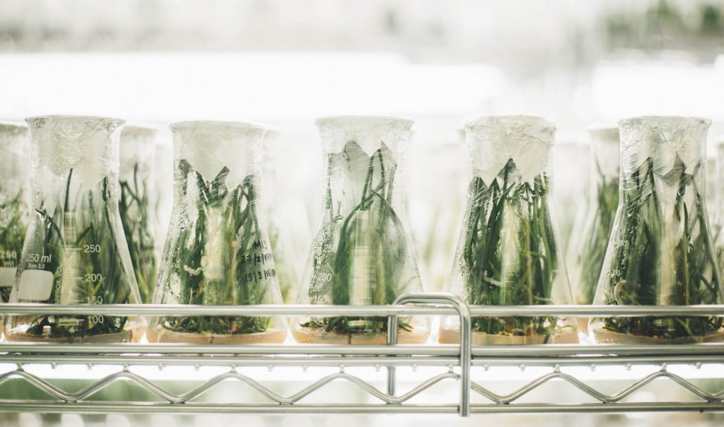 Beakers containing ambiguous greenery in a refrigerated space.